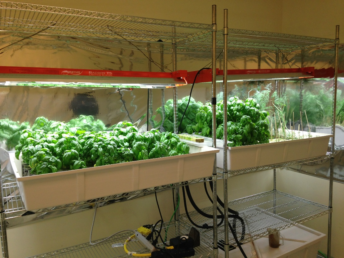 Oracle Hydroponic Herb Garden